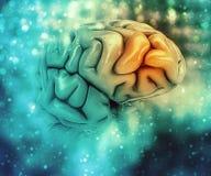 fondo médico 3D con el cerebro Imágenes de archivo libres de regalías