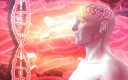 fondo médico 3D con la figura masculina con el cerebro y el filamento de la DNA Fotografía de archivo libre de regalías