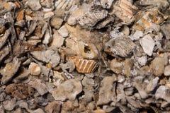 Fondo machacado de la concha marina Fotografía de archivo libre de regalías