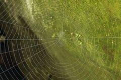 Fondo macro del verde del web de araña del detalle Foto de archivo libre de regalías