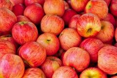 Fondo maduro rojo de la manzana Fotografía de archivo libre de regalías