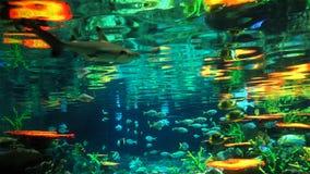 Fondo marino Fotografie Stock