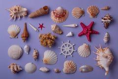 Fondo marino della composizione Fotografia Stock