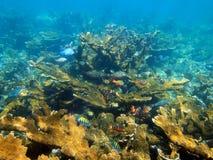 Fondo marino y arrecife de coral Fotografía de archivo