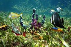 Fondo marino y pescados coloridos imagen de archivo libre de regalías