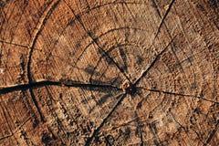 Fondo marrón agrietado de madera del vintage del círculo Fotos de archivo libres de regalías
