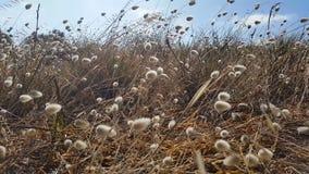 Fondo marrón de oro floral de la hierba - chíbese la mudanza en la brisa almacen de video