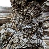 Fondo marrón del vintage de la sección agrietada de la vieja textura de madera seca retra Fotos de archivo libres de regalías