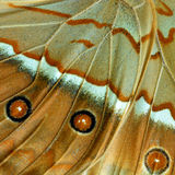 Fondo marrón hermoso con la pieza asombrosa de tres puntos de Cambo imagen de archivo libre de regalías