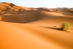 Fondo marroquí de la duna del desierto Fotografía de archivo