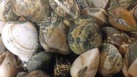 Fondo Mediterraneo dei molluschi Mollusco siciliano del vongole per la ricetta della pasta Immagine Stock Libera da Diritti
