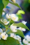 Fondo minúsculo de la macro de las flores Foto de archivo libre de regalías