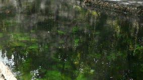Fondo minerale dell'acqua di fonti di CBlue, avvolgente stock footage