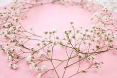 Fondo minimalistic de la primavera con una guirnalda del gypsophila delicado de las flores blancas en un fondo rosado imagen de archivo