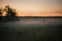 Fondo mistico del prato con erba alta e nebbia fredda contro il cielo di tramonto Fotografie Stock Libere da Diritti