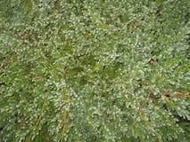 Fondo mobile dei rami di albero di verde di foto fotografie stock