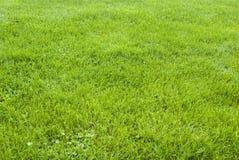 Fondo-modello dell'erba verde Fotografie Stock Libere da Diritti