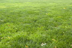 Fondo-modello delle foglie di giallo e dell'erba verde Immagine Stock