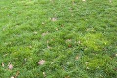 Fondo-modello delle foglie di marrone e dell'erba verde Immagini Stock Libere da Diritti