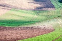 Fondo/modelo con las curvas de f rural texturizada arada ondulada fotografía de archivo