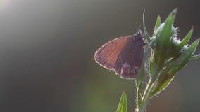 Fondo molle del fuoco del bello whith della farfalla al sole di estate stock footage