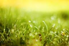 Fondo molle dell'erba verde della sfuocatura Immagine Stock