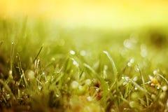 Fondo molle dell'erba verde della sfuocatura Fotografia Stock