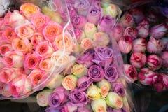 Fondo molle delle rose di colore Immagini Stock