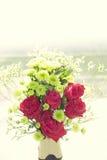 Fondo molle delle rose di colore Immagini Stock Libere da Diritti