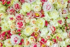Fondo molle delle rose di colori Immagine Stock