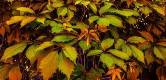 Fondo molto bello delle foglie variopinte! fotografie stock