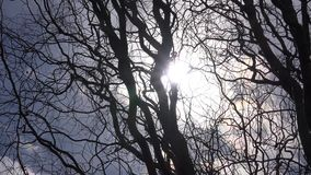 Fondo muerto seco de las ramas del árbol contra los rayos de Sun 4K UltraHD, UHD metrajes