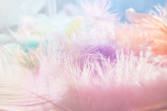 Fondo multicolore molle della piuma Fotografia Stock