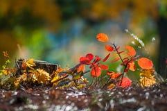Fondo muy hermoso del otoño en el bosque Imágenes de archivo libres de regalías
