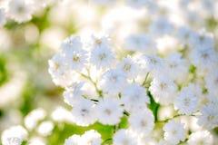 Fondo muy ligero de la respiración del ` s del bebé de las flores Imagen de archivo