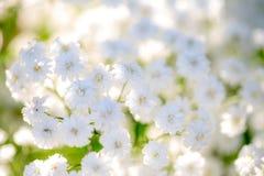 Fondo muy ligero de la respiración del ` s del bebé de las flores Imagen de archivo libre de regalías