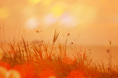 Fondo natural abstracto con la hierba en el prado y la naranja Fotos de archivo