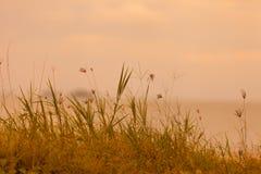 Fondo natural abstracto con la hierba en el prado y la naranja Imágenes de archivo libres de regalías