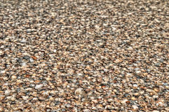 Fondo natural - cáscaras del mar Fotografía de archivo libre de regalías