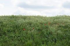 Fondo natural con la hierba plata-verde Imagen de archivo
