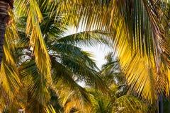 Fondo natural con la reflexión de las hojas y del sol de la palmera Foto de archivo