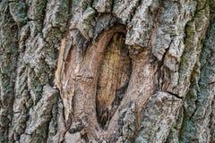 Fondo natural, curvas texturizadas marrones de la corteza, vivos y el cada vez mayor, naturales y naturales y modelos fotografía de archivo