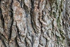 Fondo natural, curvas texturizadas marrones de la corteza, vivos y el cada vez mayor, naturales y naturales y modelos fotos de archivo