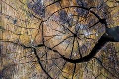 Fondo natural, curvas texturizadas marrones de la corteza, vivos y el cada vez mayor, naturales y naturales y modelos imagen de archivo libre de regalías