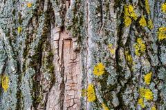 Fondo natural, curvas texturizadas marrones de la corteza, vivos y el cada vez mayor, naturales y naturales y modelos imagenes de archivo