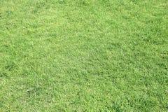 Fondo natural de la hierba verde Visión superior fotos de archivo libres de regalías