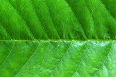 Fondo natural de la hoja Imagen de archivo libre de regalías