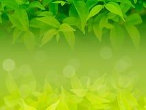 Fondo natural de la hoja verde Imágenes de archivo libres de regalías