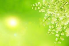 Fondo natural de la primavera. Imagen de archivo libre de regalías