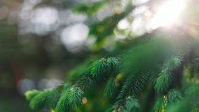 Fondo natural de la primavera hermosa E Foco suave foto de archivo libre de regalías